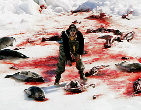 it is wrong to kill animals for their fur do you agree Why is killing animals for food considered a sin and killing plants is not, even though both are living beings it is true that the animals consume and kill each other without any forbearance.
